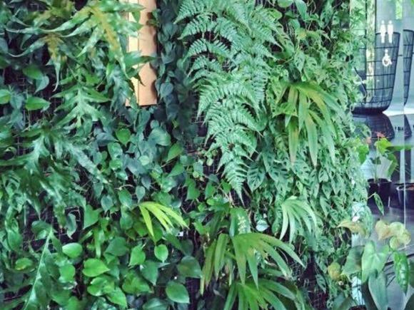 绿化墙 绿墙 小型绿化墙