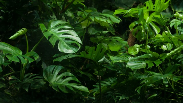 你应该知道这些植物的魅力