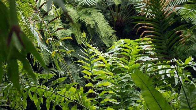 绿色植物室内空气天然净化器