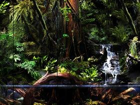 室内雨林景观